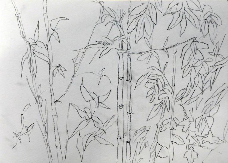 bambous glycine 1