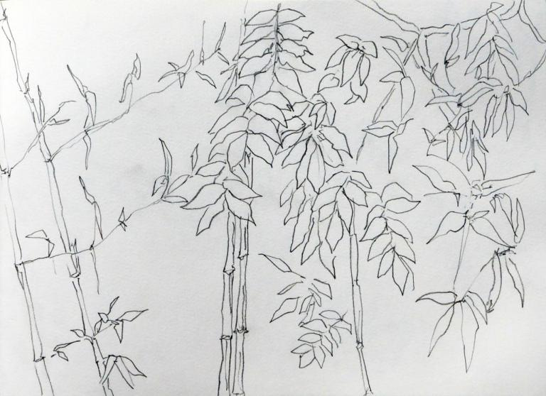 bambous glycine 2