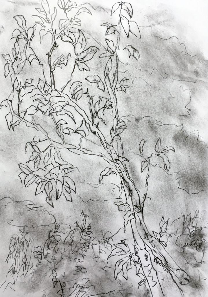 magnolia ciel gris