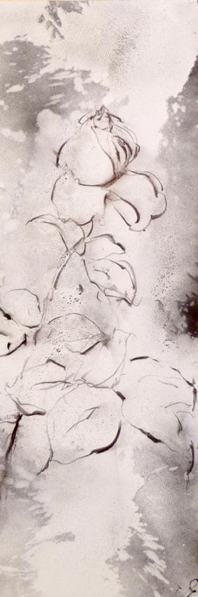 rose-noire-de-marrakech-1