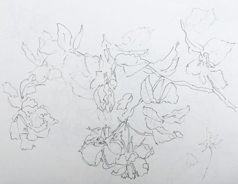 roses du 12 aout 2017