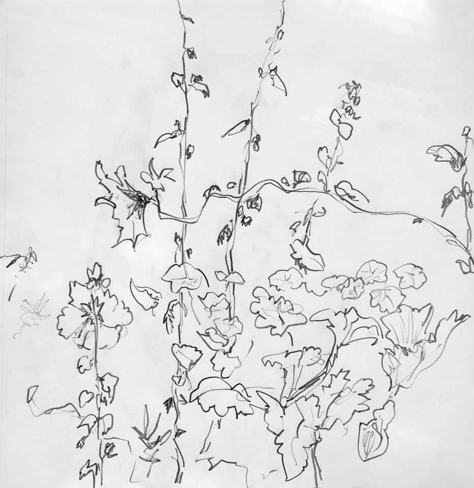 Plantes  , fleurs ,  mine de plomb, graphite , pierre noire