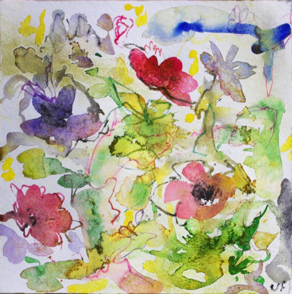 anemone 6