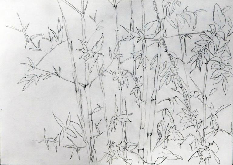 bambous glycine 3