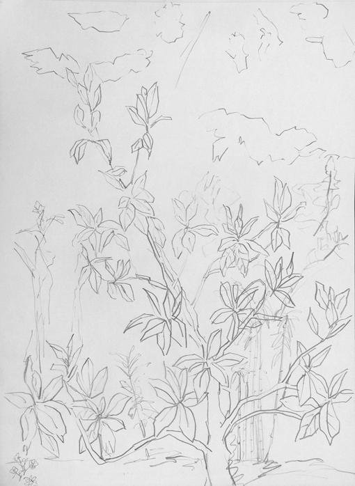 magniolia-grandiflora
