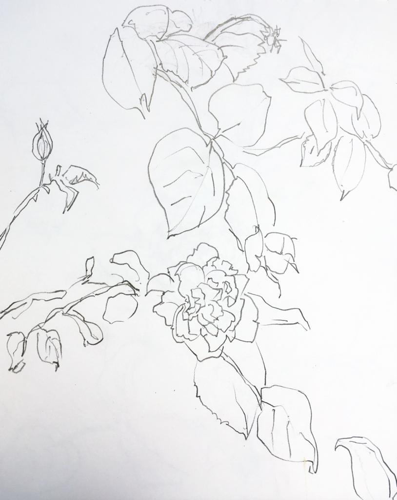 rose 6