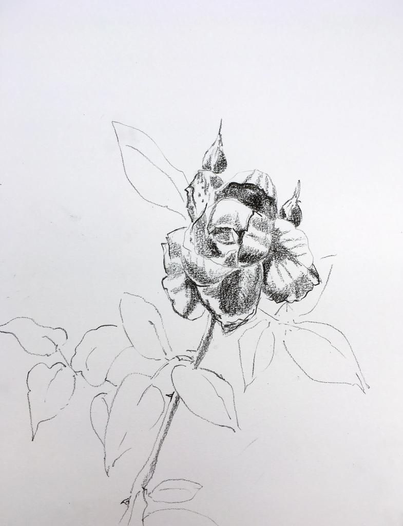 rose du 13 aout