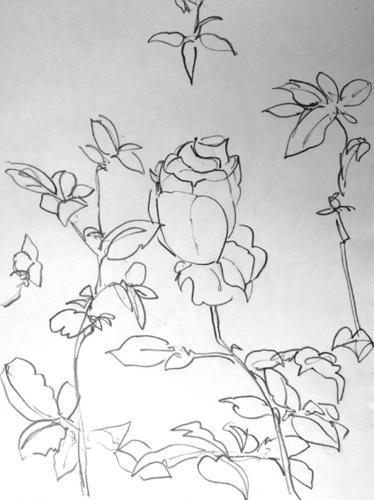rose--du-maroc-