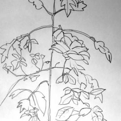 rose-et-plante-