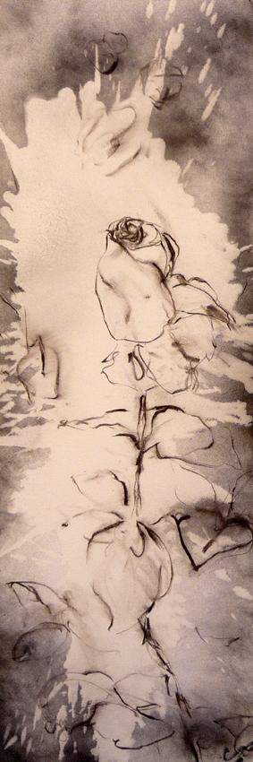 rose-noire-de-marrakech-fusain